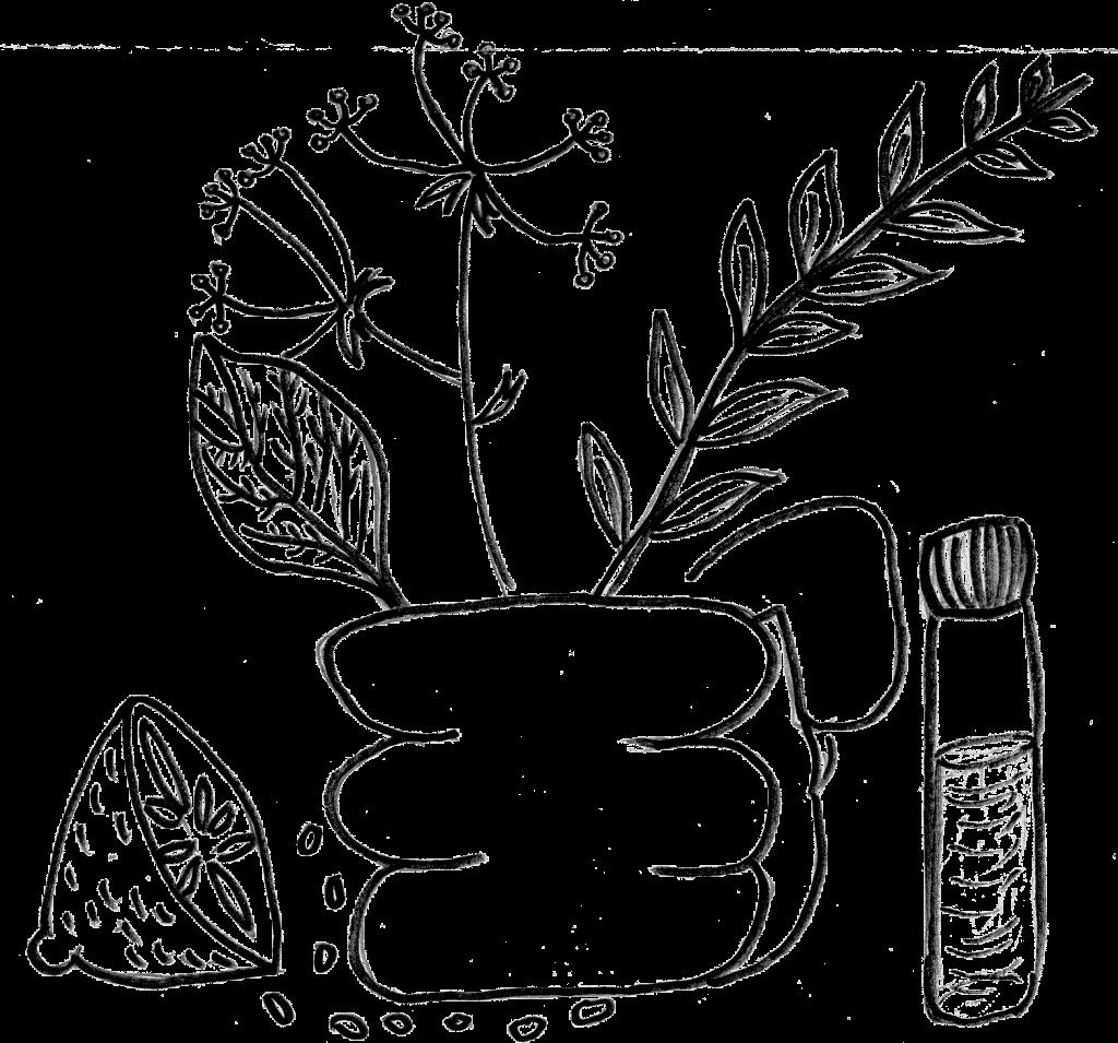 Събиране на диворастяща храна и медицински растения Учене за промяна